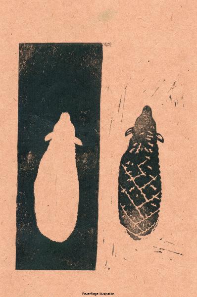 191201_schafe
