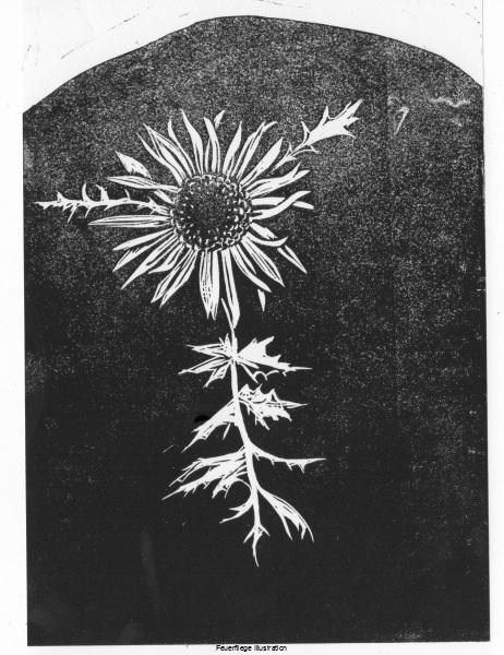 191201_silberdistel