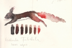 eichhörnchen_farbskala_skizze
