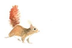 Eichhörnchen_mitWinterfell